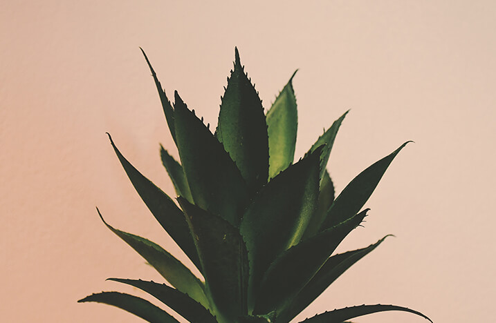 Green Plant on Pastel Background