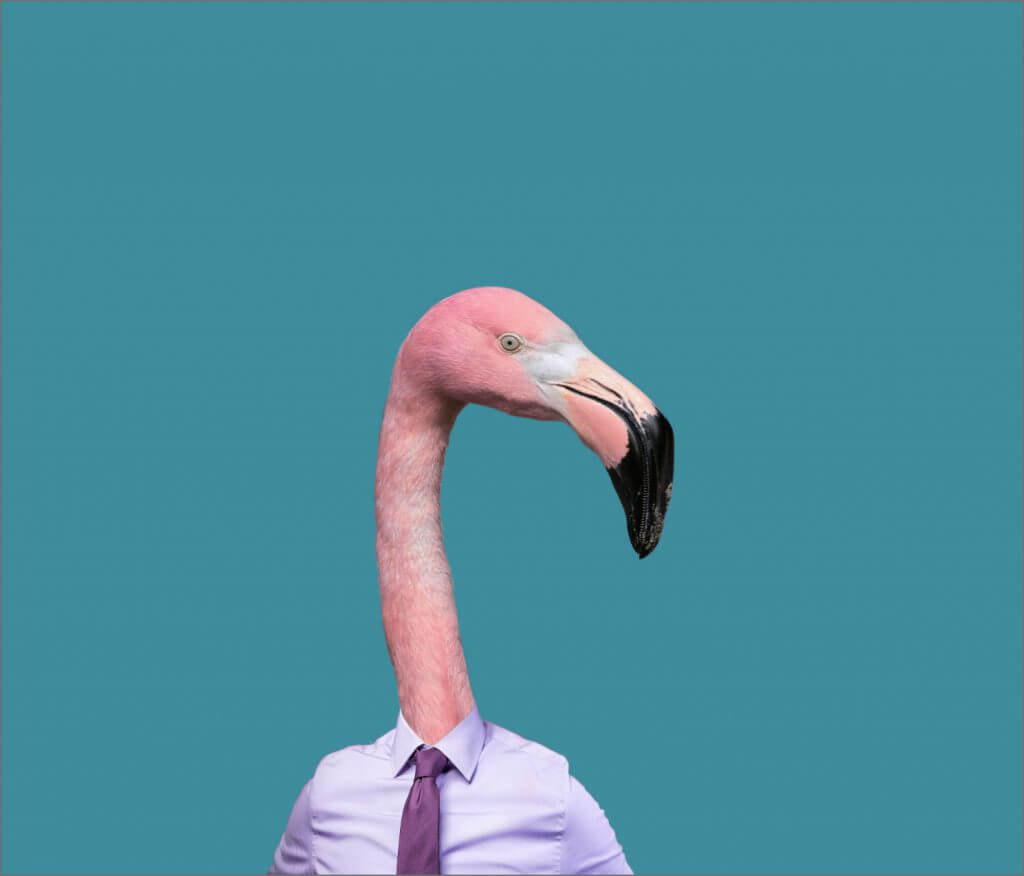 Man with flamingo head